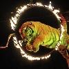 Цирки в Томилино