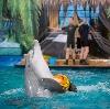 Дельфинарии, океанариумы в Томилино